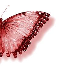 p_papillon1.jpg
